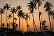 Tall Coconut Tree Silhouettes During Orange Sunset in Anjuna, Goa - India