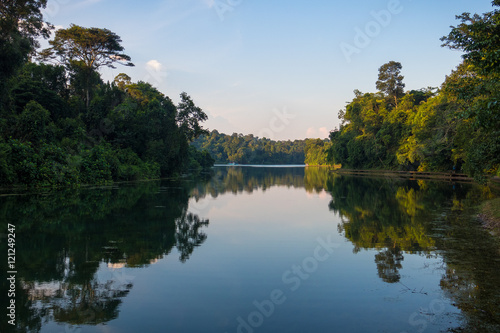 Photo  Afternoon reflection at Macritchie Reservoir