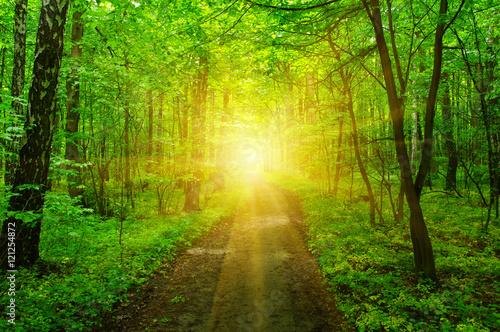 La pose en embrasure Jaune Forest and sun