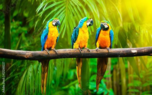 Naklejki papugi  bif-parrots