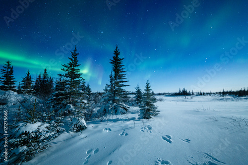 Fotobehang Noorderlicht Snowshoe Hare Tracks And The Aurora Borealis