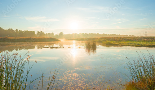 Foto op Aluminium Meer / Vijver Shore of a lake at sunrise in summer