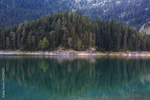 Photo sur Aluminium Gris traffic Forest lake