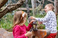 London Zoo In Summer
