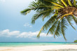 Beautiful Exotic beach with coconut palm tree