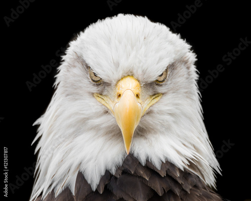Deurstickers Eagle Bald Eagle X