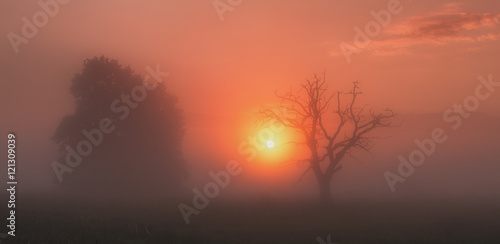 Foto op Aluminium Koraal sun coming throw fog