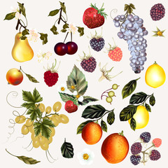 Panel Szklany Owoce Mega pack of vector fruits and berries created in vintage style