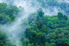 Tropical Forest With Steamy Morning Mist Evaporating