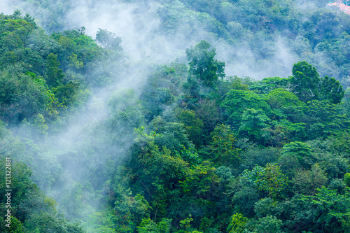 Pinturas sobre lienzo  Tropical forest with steamy morning mist evaporating