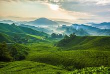 Misty Morning In Cameron Highlands Tea Plantation A
