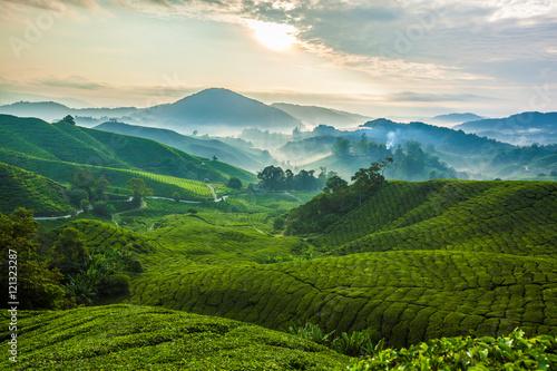 Misty morning in Cameron Highlands tea plantation A Canvas Print