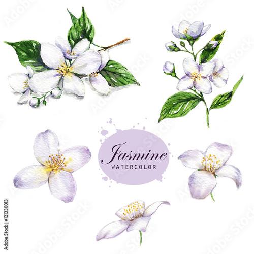 Photo  Hand-drawn watercolor illustration of the jasmine