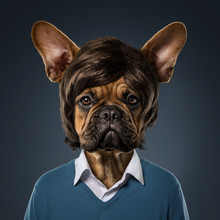 Cute Bulldog Portrait With Fancy Haircut, Wearing Human Clothes