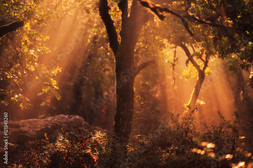 Enchanted Forest. Lovely Autumn Forrest with Sunrays in Sicily, Europe