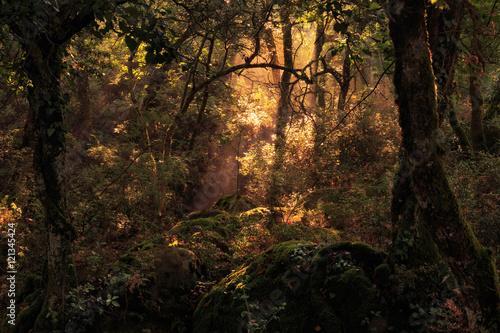 Poster de jardin Europe Méditérranéenne Enchanted Forest. Lovely Autumn Forrest with Sunrays in Sicily, Europe