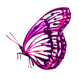 Fototapeta Motyle - butterfly,watercolor, isolated on a white