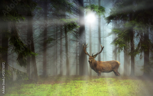Foto op Canvas Hert Hirsch im Nebelwald - Deer in a misty forest