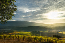 Sun Rays Shine On Patchwork Sonoma Vineyard And Mountains At Sunset In Autumn. Panorama Of Sonoma Valley Wine Country With Rolling Hills At Harvest Time.