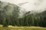 Fototapeta Las - fog covering fir trees forest in mountain landscape