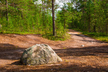 Big Boulder Lying On The Road In Forest In Summy Summer Day.