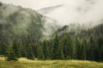 Obraz fog covering fir trees forest in mountain landscape