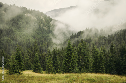 Photo  fog covering fir trees forest in mountain landscape