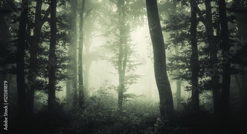 Keuken foto achterwand Olijf forest with trees in fog