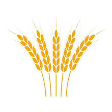 Wheat Ears Or Rice Icon. Crop ...