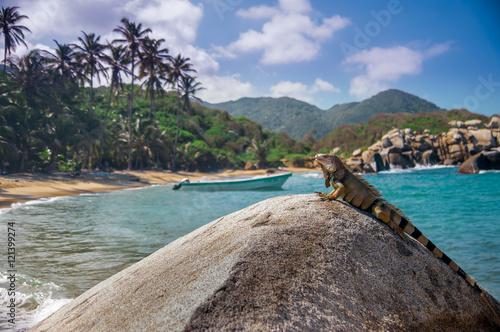 iguana in park tayrona