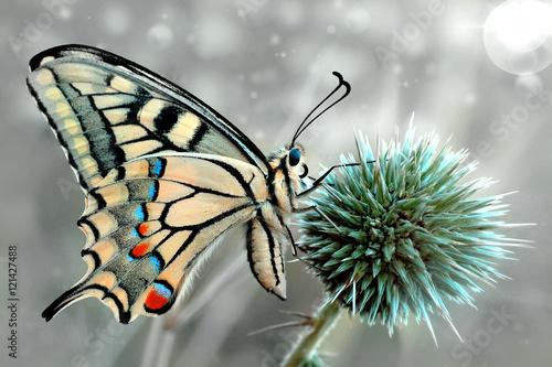 Tuinposter Macrofotografie Butterfly