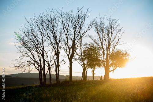 Valokuva  Trees alone in sunset - beautiful nature