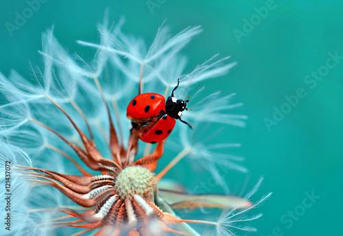 Poster Natuur Ladybug