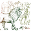 Illustration of African animals.