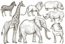African Animals Elephant, Giraffe, Lion, Zebra, Rhino And Hippop