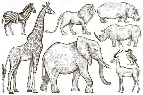 African animals elephant, giraffe, lion, zebra, rhino and hippop Canvas Print