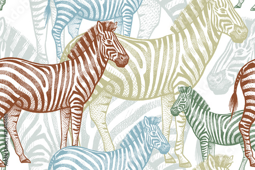 Seamless pattern with African animals zebra. Canvas Print