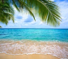 FototapetaCaribbean sea and palm leaves.
