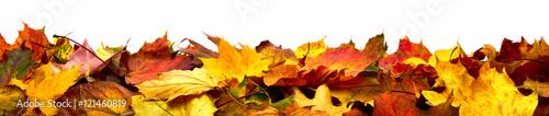 Obraz Bunte Blätter als Herbst Bordüre, isoliert auf reinem Weiß - fototapety do salonu