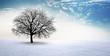 Leinwanddruck Bild - Kahler Baum im Schnee