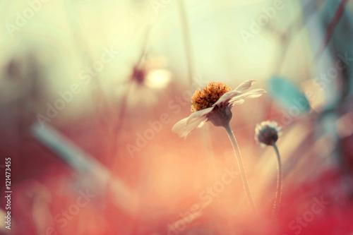 Fotobehang Macrofotografie Flower in pink