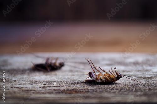 cockroaches on wooden floor.