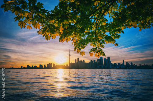 Stampa su Tela  Toronto skyline with maple branches