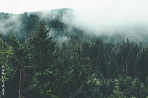 gora-pelna-zielonych-drzew-i-mgly