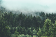 Mountain Full Of Green Trees And Fog