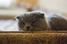 The Cute Gray Cat