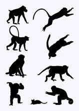 Monkeys Silhouette