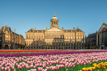 National Tulip Day At The Dam Square In Amsterdam, Netherlands