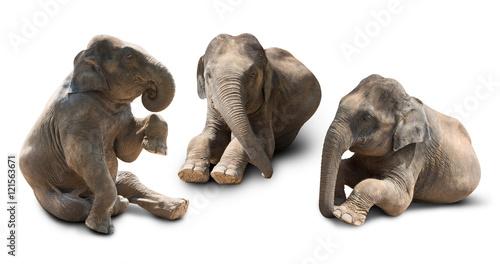 trzy-prawdziwe-slonie-na-bialym-tle