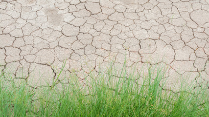Grass in soil drought cracked texture